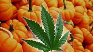 , October Cannabis Industry News Highlights