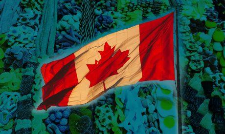 Cannabis Edibles Dominate in Canada's Legal Marijuana Market