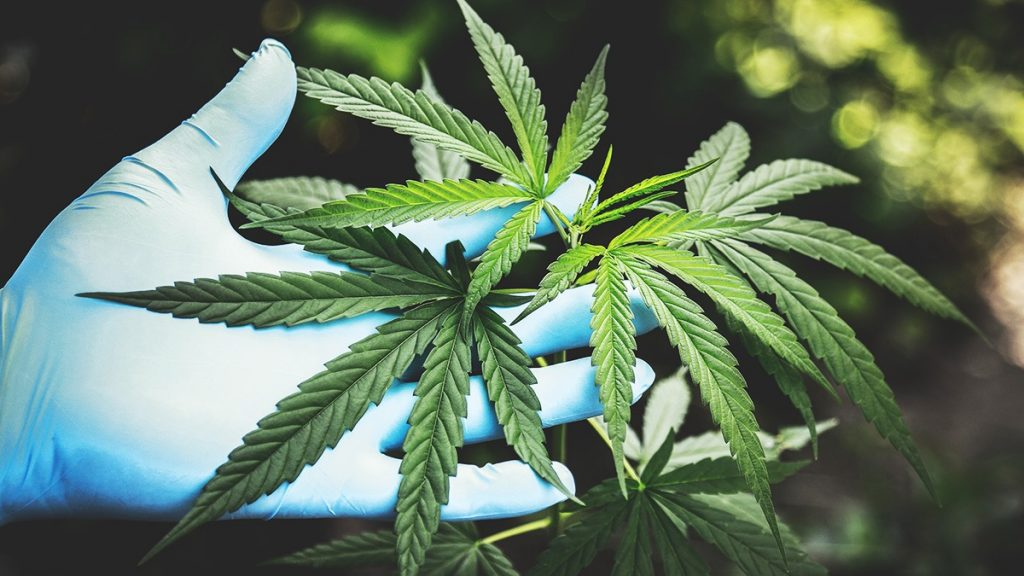 , Study: Marijuana legalization does not lead to increased youth use