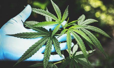 Lawmakers Bring Coronavirus Relief Bill to Cannabis Industry