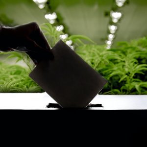 , 2020 Election: Cannabis Legalization Results