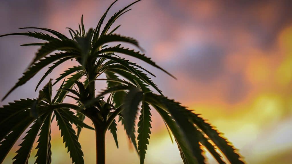 , July Cannabis Roundup